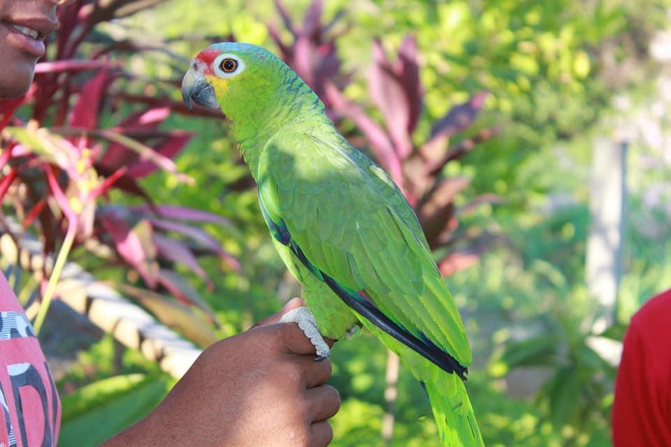 Manawakie Eco Park